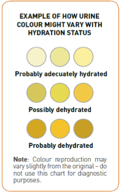 urine Hydration levels